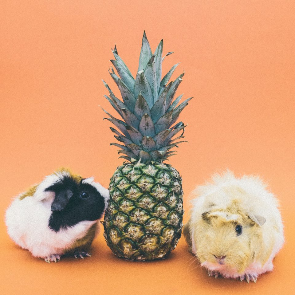 pineapple-supply-co-79711-unsplash